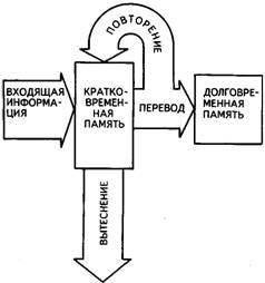 Память человека: что это такое, психология и психофизиология