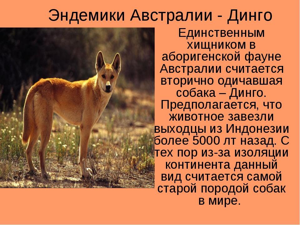 Эндемики - это что? эндемики россии - gkd.ru