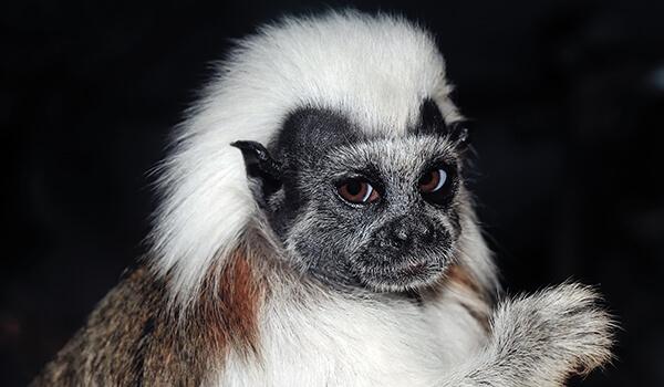 Обезьяна: разновидности, названия, обитание, питание интересные факты, происхождение человека от обезьяны — краткое описание животного для детей