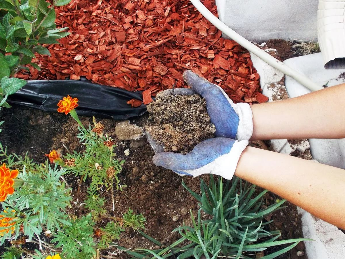 Подробно о мульчировании почвы. что это такое? зачем необходимо? виды, материалы, правила, ошибки. фото — ботаничка.ru