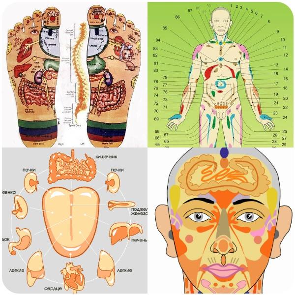 Висцеральный массаж (висцеральная терапия)