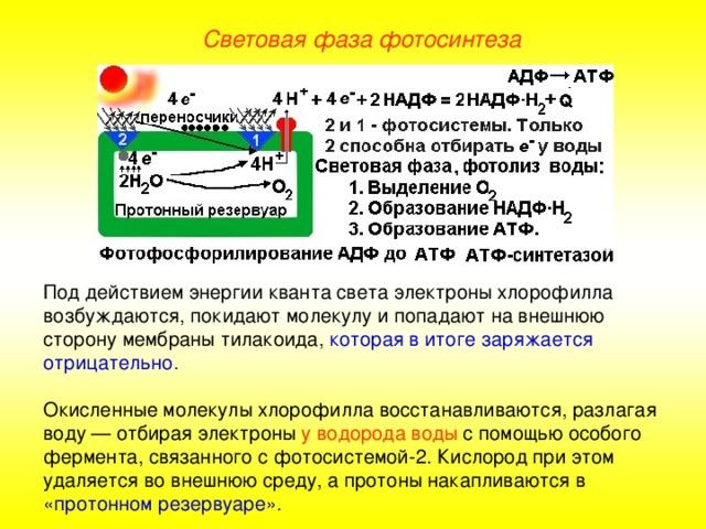 Фотолиз википедия