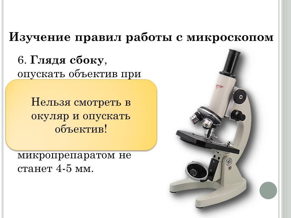 Что такое микроскоп? определение, фото