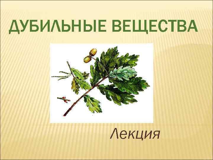 Что такое дубильные вещества в травах. полезные и целебные свойства дубильных веществ в чае