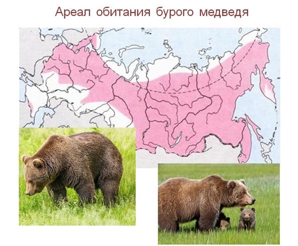 Что такое ареал вида в биологии - определение. место обитания вида