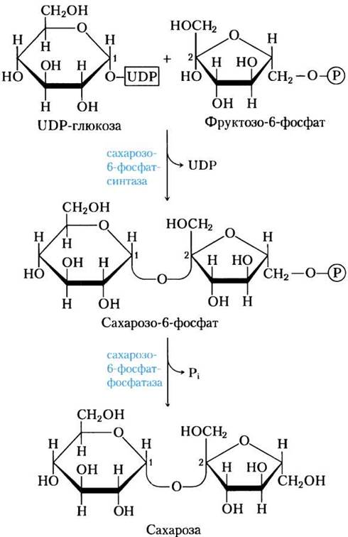 Сахароза — википедия. что такое сахароза