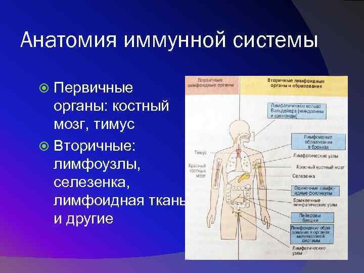Как работает иммунитет человека? подробный разбор