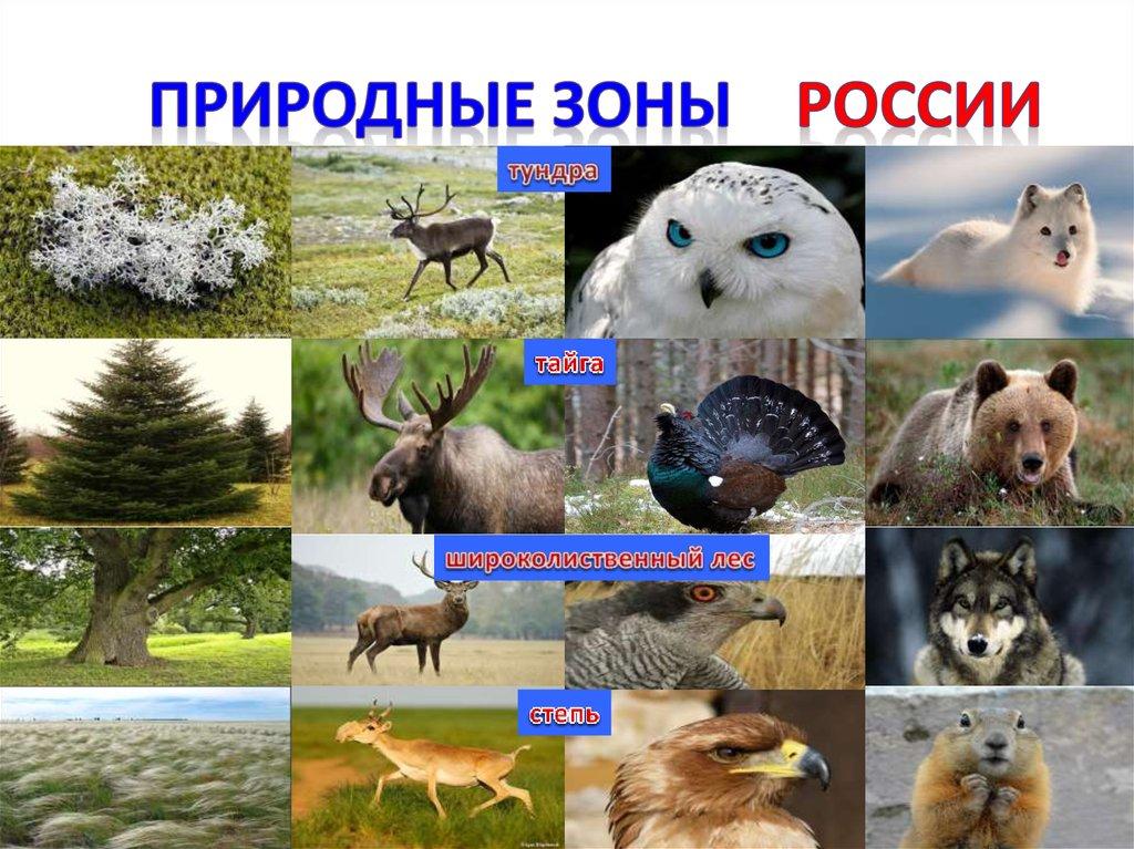Что такое природные зоны? - other