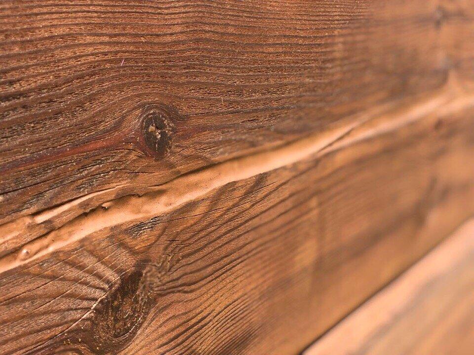 Дерево — википедия. что такое дерево