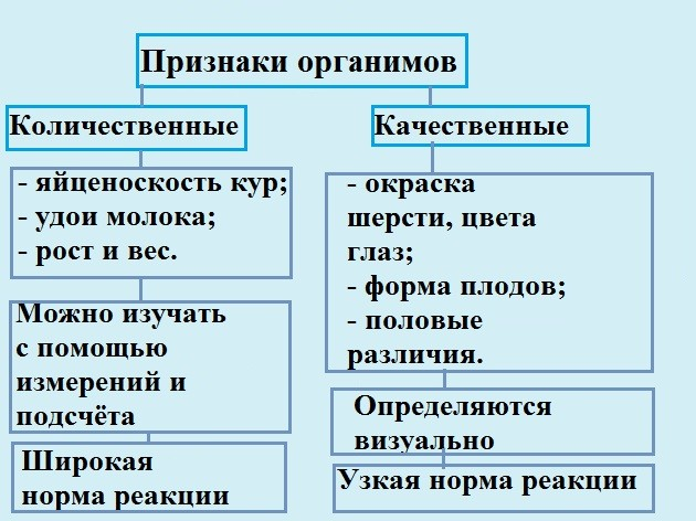 Норма реакции мочи (ph). что такое ph в анализе мочи и для чего определяют реакцию