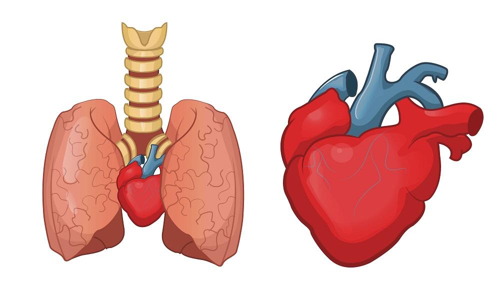 Хроническое легочное сердце: что это такое, сколько с этим живут, диагностика и лечение