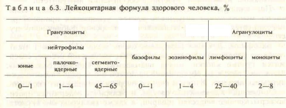 Лейкоцитарная формула: нормы, расшифровка