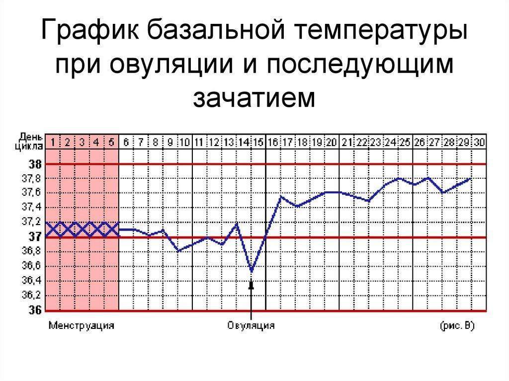 Базальная температура при беременности на ранних сроках