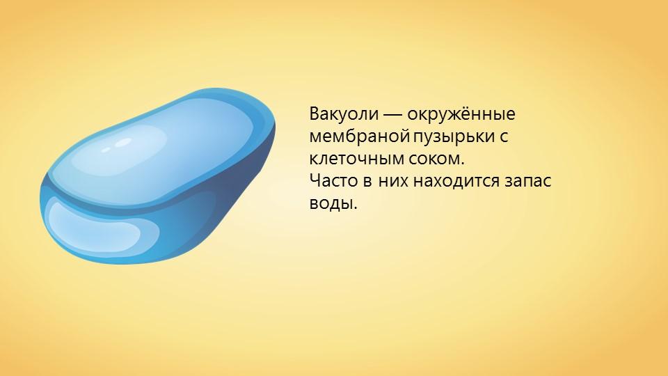 Вакуолі: їх будова, функції та роль в клітині