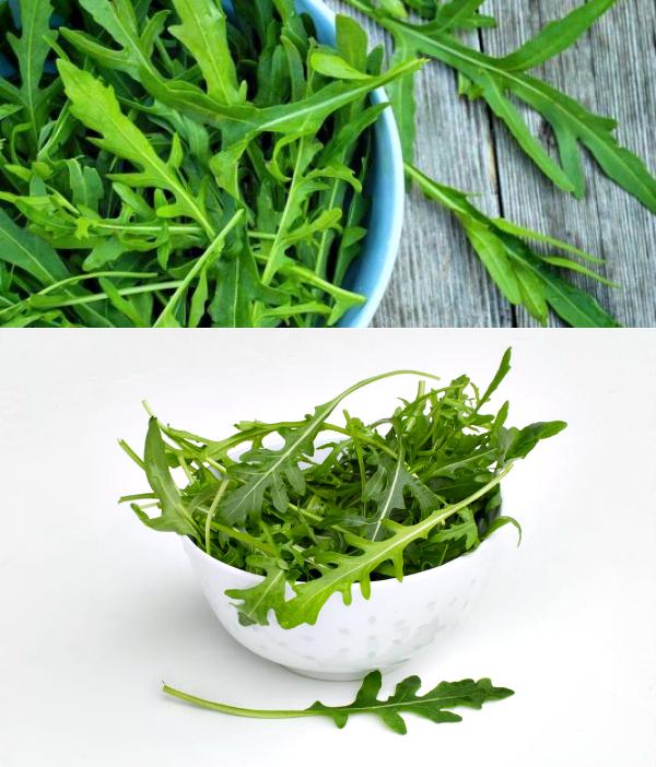 Рукола - полезные свойства и рецепты с диетической зеленью