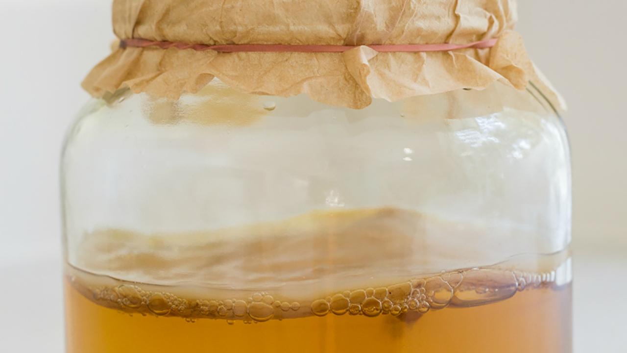 Чайный гриб —что это такое? польза и вред, противопоказания