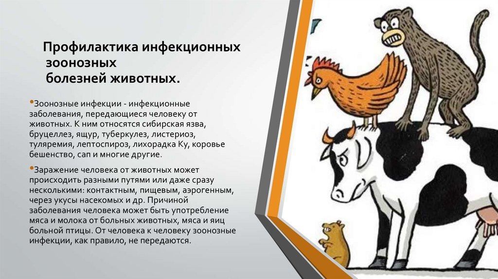 Зоонозные заболевания - medical insider