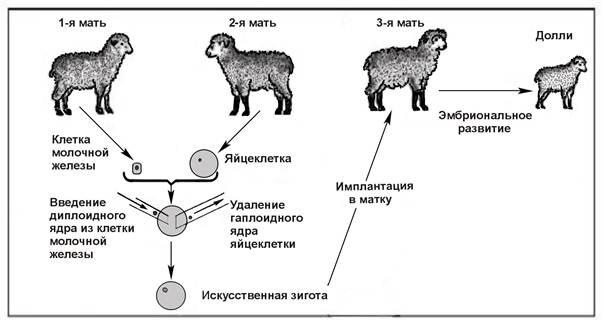 Клонирование животных – за и против