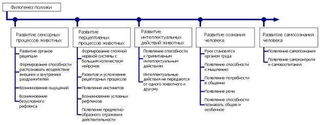 Филогенез в психологии: этапы развития