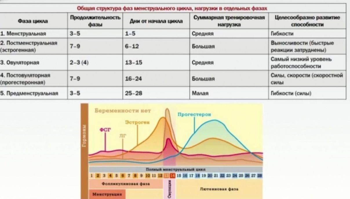 Что такое лютеиновая фаза? недостаточность лютеиновой фазы и норма. беременность и лютеиновая фаза