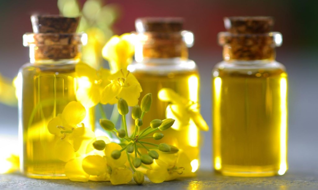 Вред и польза рапсового масла