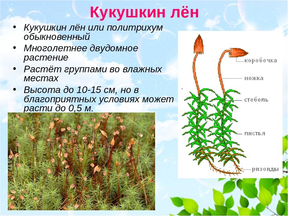 Что такое мхи? строение, размножение, виды мхов, их значение и применение