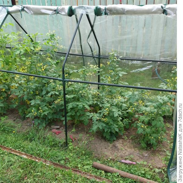 Семена чиа: польза, вред и противопоказания | food and health