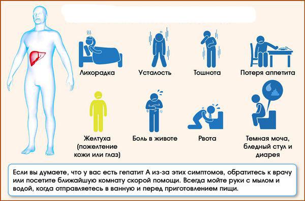 Гепатиты а, в и с: в чем разница, пути заражения, симптомы и лечения