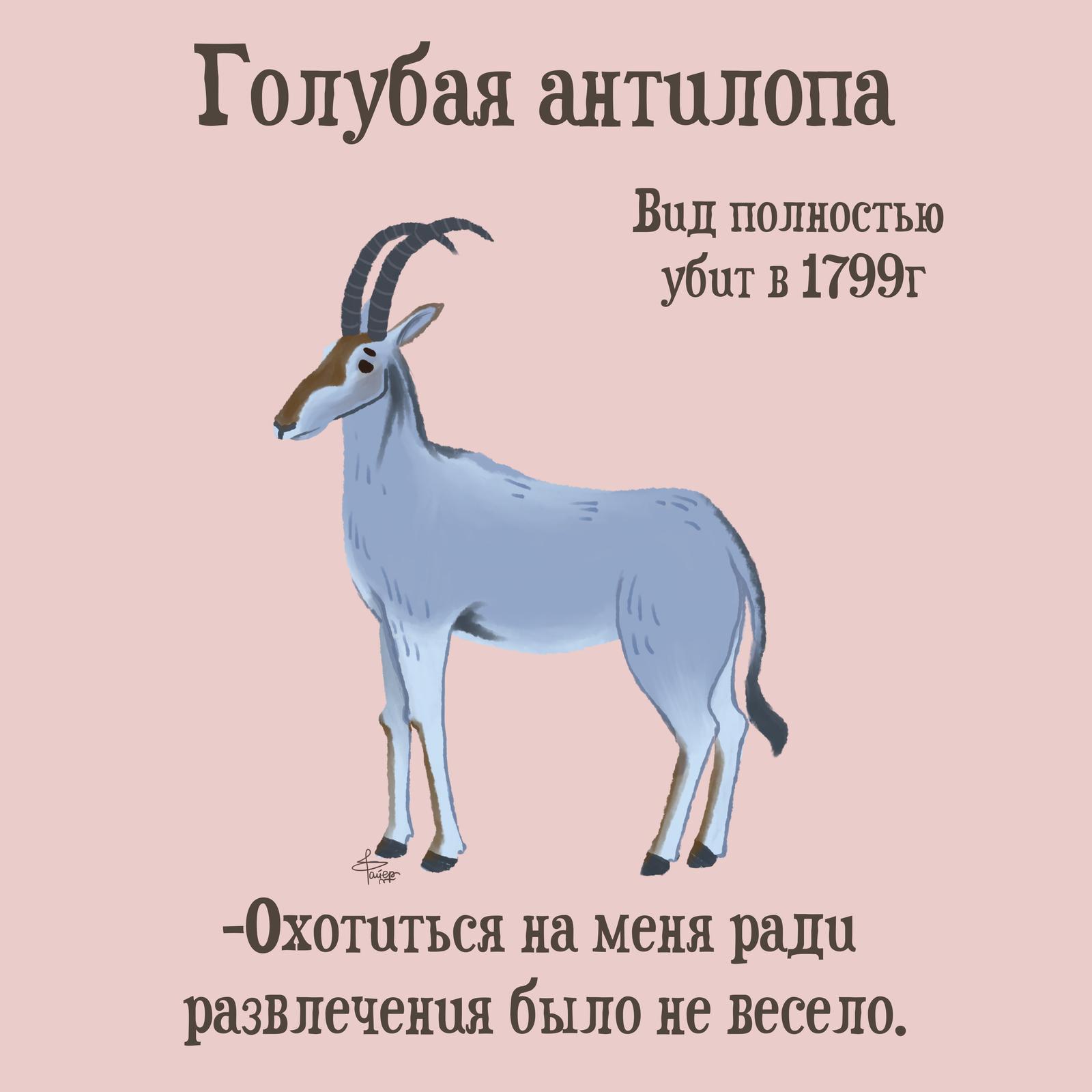 Описание белого носорога из красной книги