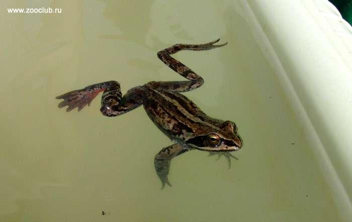 Что означает символ лягушки? описание, виды, определение и обозначение символа в разных странах, положительное влияние и значения для человека