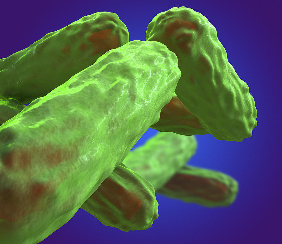 Туберкулезная палочка размножение - все о простуде и лор-заболеваниях