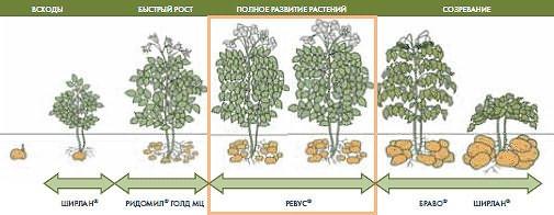 Что такое период вегетации у плодовых деревьев