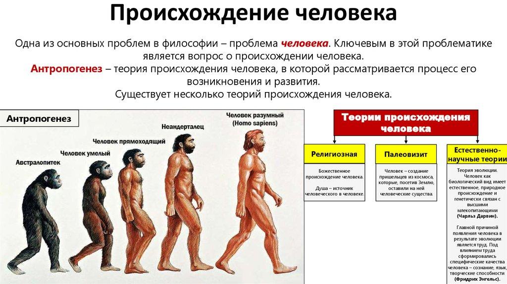 Биологическая эволюция: понятие, суть, признаки и факторы