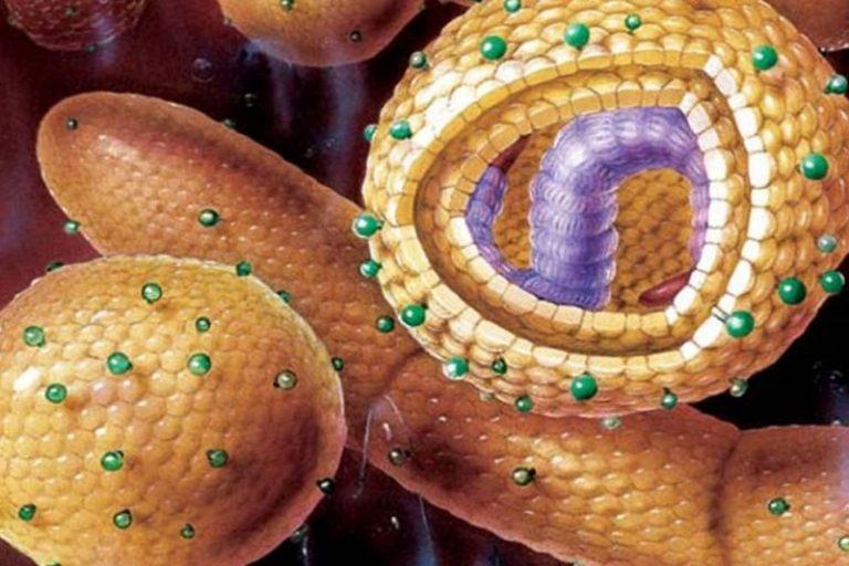 Гепатит с: признаки и причины возникновения этой болезни у взрослых, диагностика и профилактика заболевания