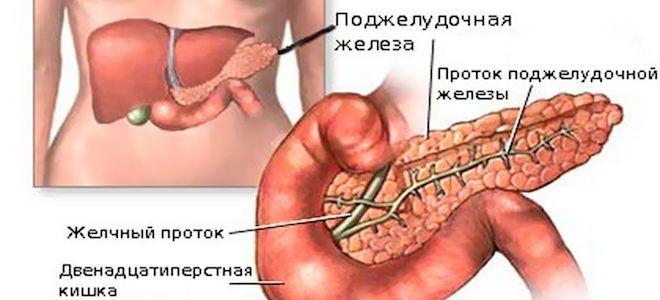 Поджелудочная железа: анатомия и функции, где находится, с какой стороны, строение, что вырабатывает, за что отвечает, может ли человек жить без этого органа
