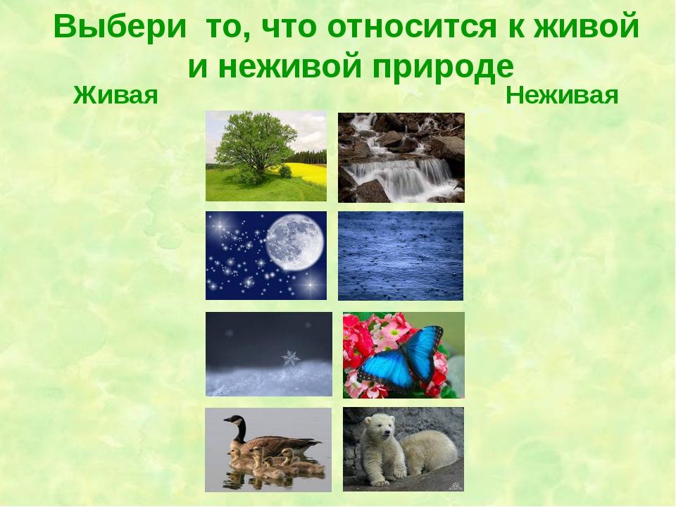 """Что такое природа? живая и неживая природа. значение и разбор слова """"природа"""""""