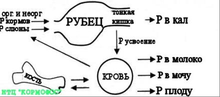 Фосфор — википедия