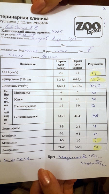 За что отвечают моноциты и какая норма в крови у взрослых и детей