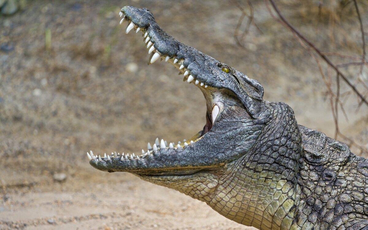 Настольная игра крокодил: как играть, правила, слова, видеообзор