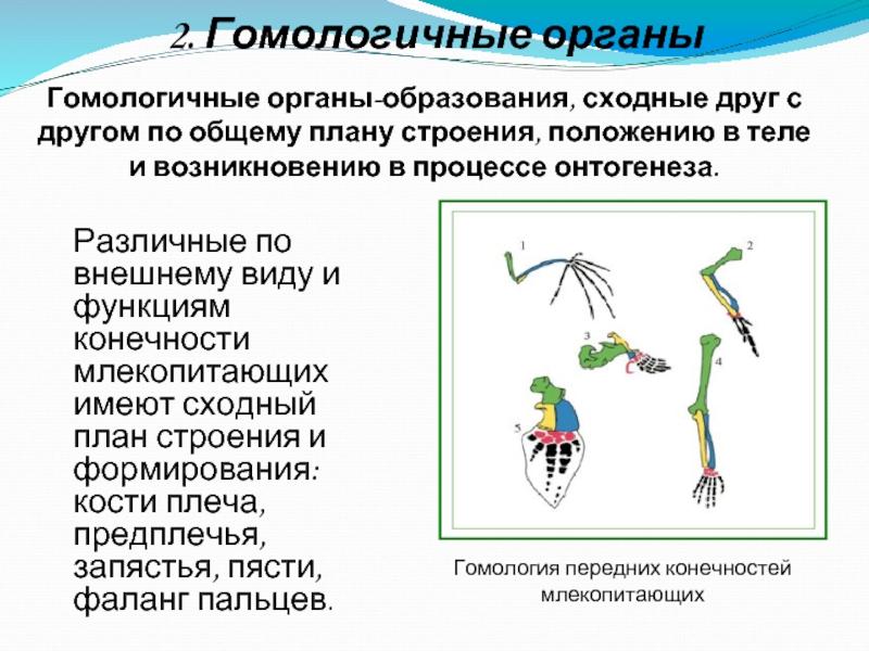 Аналогичные органы: понятие и примеры :: syl.ru