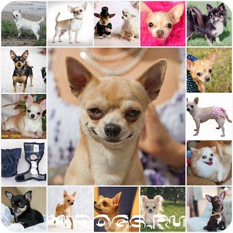 Течка у собак: что должен знать хозяин питомицы