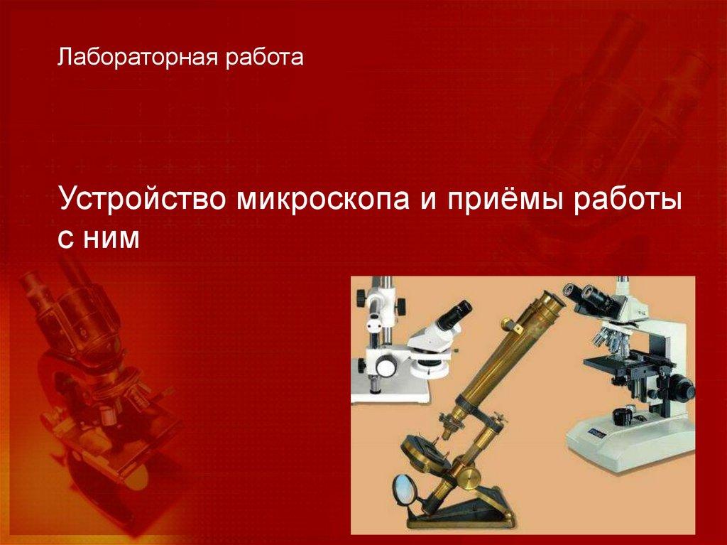 Микроскоп: строение, как выглядит, применение   food and health