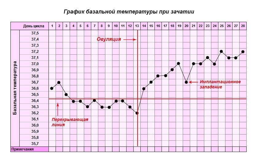 Базальная температура особенности измерения и чтение графика | women planet