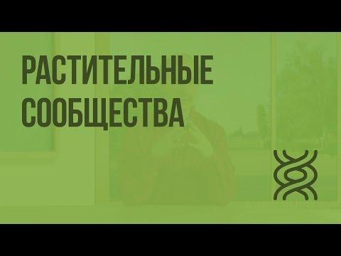 """Что такое сообщество? сообщества в """"вконтакте"""". мировые сообщества"""