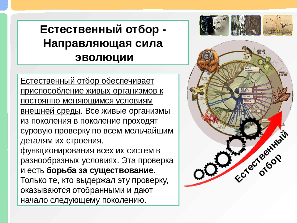 Естественный отбор — циклопедия