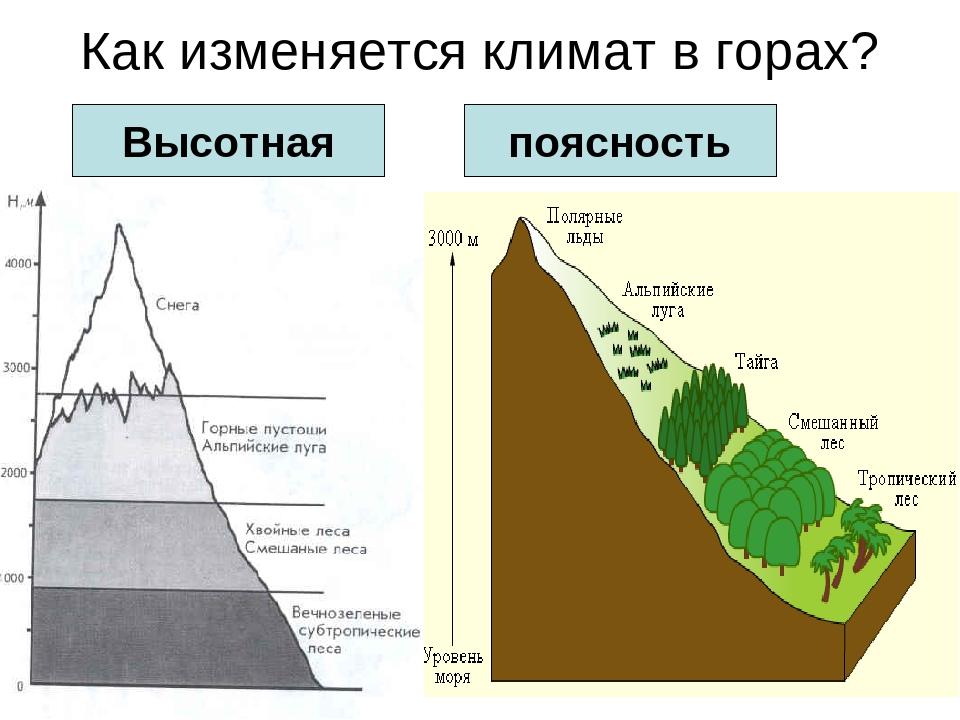 Природная зональность. широтная и высотная зональность
