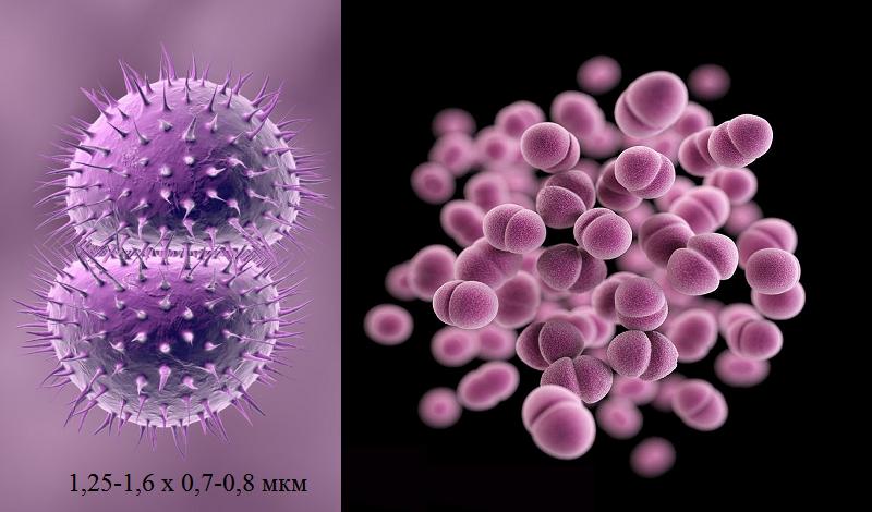 Гонорея у женщин: симптомы, фото, лечение. препараты от гонореии