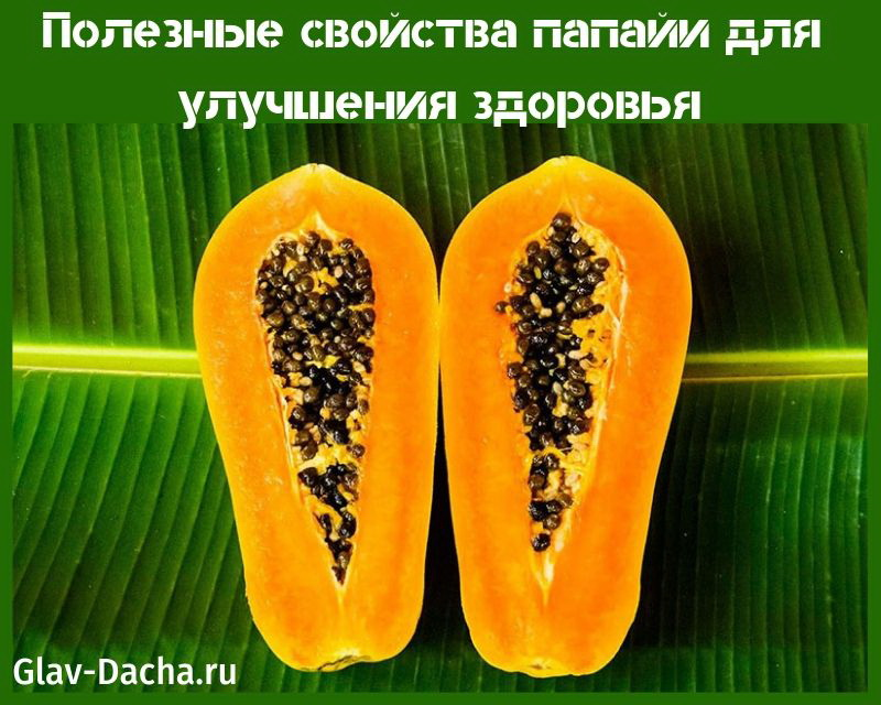 Папайя: советы по уходу в условиях комнатного выращивания
