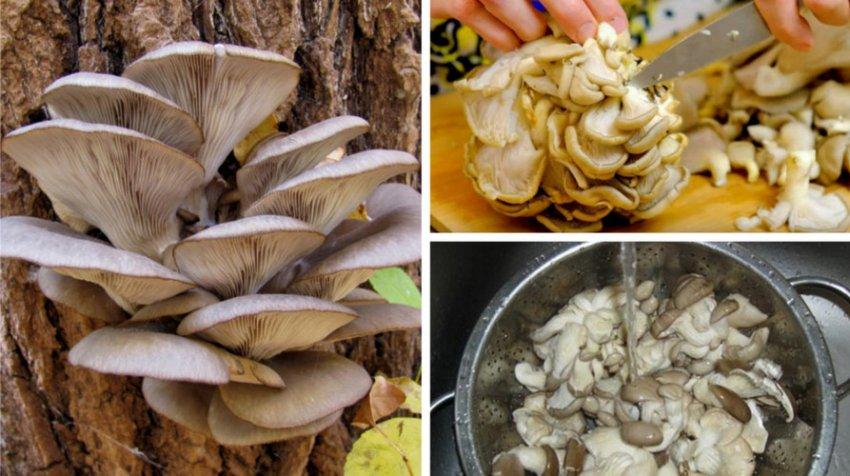 Говяжья пашина: бжу (содержание белков, жиров, углеводов), калорийность, питательная ценность и польза
