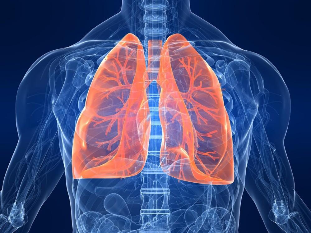 Легкие человека - строение и функции pulmono.ru легкие человека - строение и функции